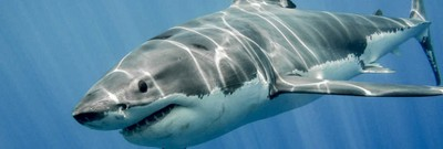 'If It Can Kill You, That's the Best': The Origins of Shark Week