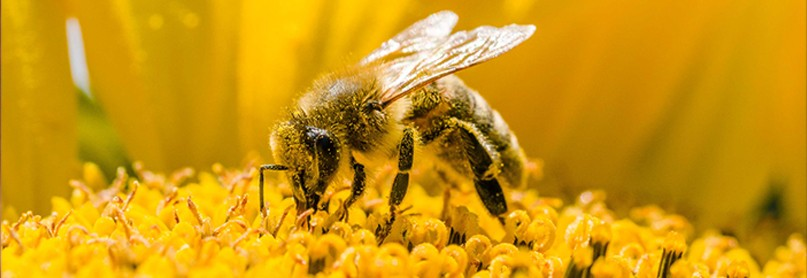 Lessons from the Hive: The Strange and Fascinating World of Bees