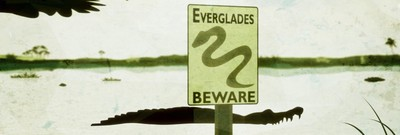 Snakes in the Everglades! Pythons Threaten Florida's Ecosystem