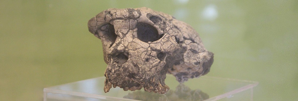 Old Bones, New Stories: How Toumai, Ardi, Lucy & UR 501 Changed Our View of Human Evolution