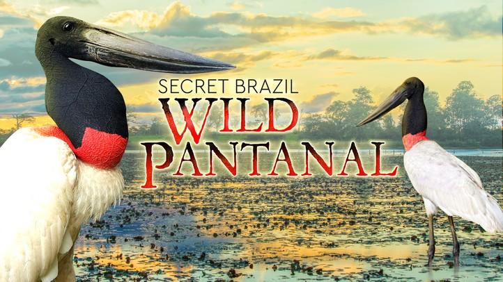 Secret Brazil: Wild Pantanal