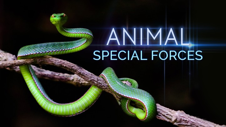 Animal Special Forces
