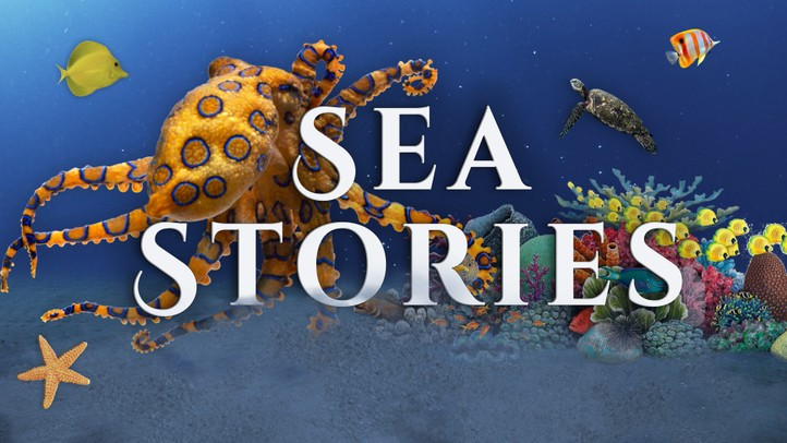 Sea Stories 4k