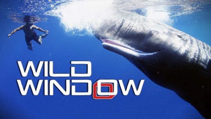 Wild Window 4k