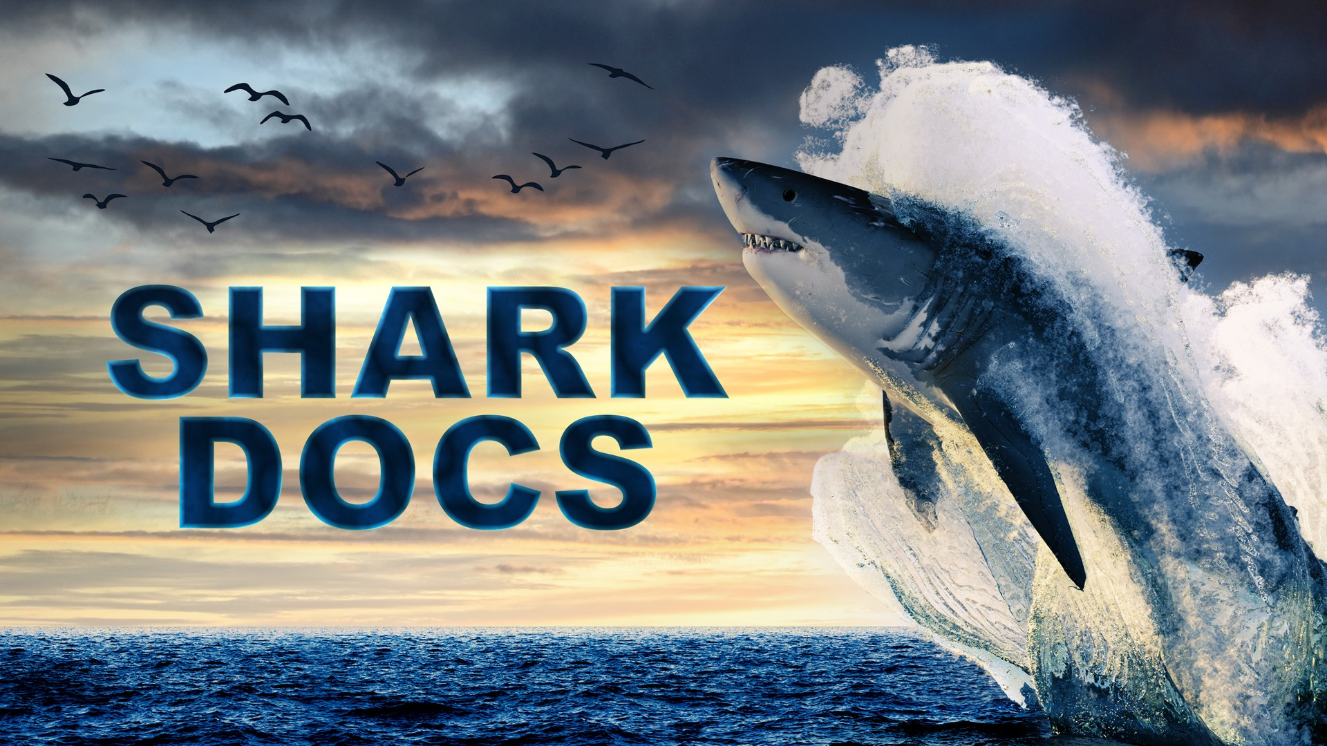 Shark Docs