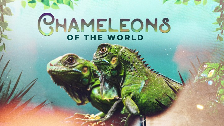Chameleons of the World