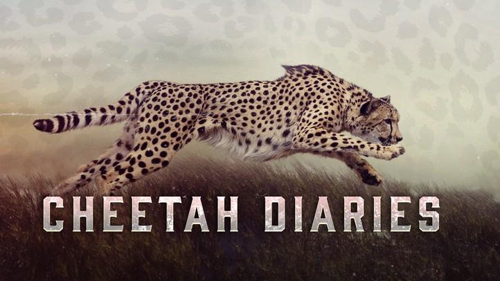 Cheetah Diaries