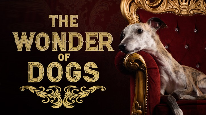 The Wonder of Dogs - 4k