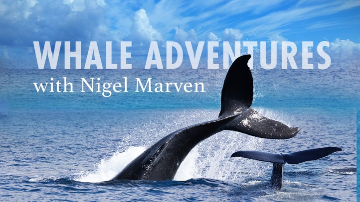 Whale Adventures with Nigel Marven