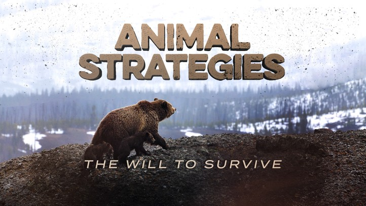 Animal Strategies: The Will to Survive