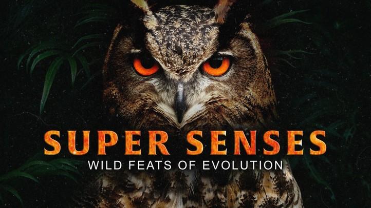 Super Senses: Wild Feats of Evolution