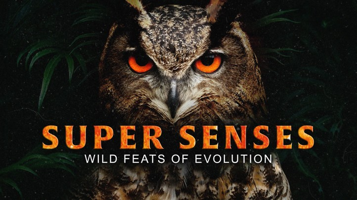Super Senses: Wild Feats of Evolution