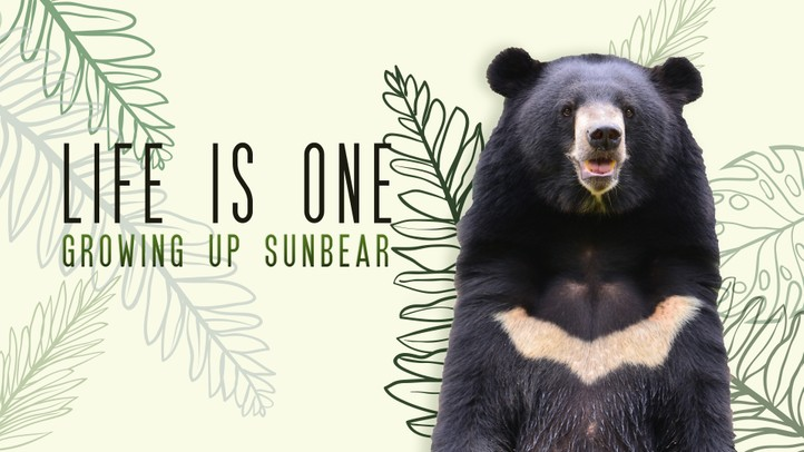 Life is One: Growing Up Sun Bear