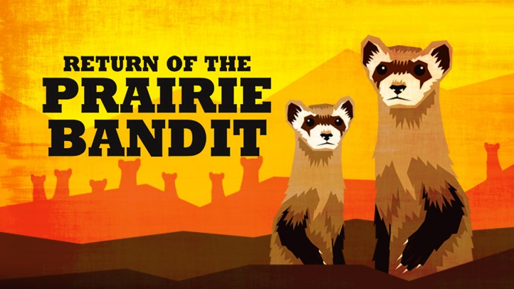 Return of the Prairie Bandit