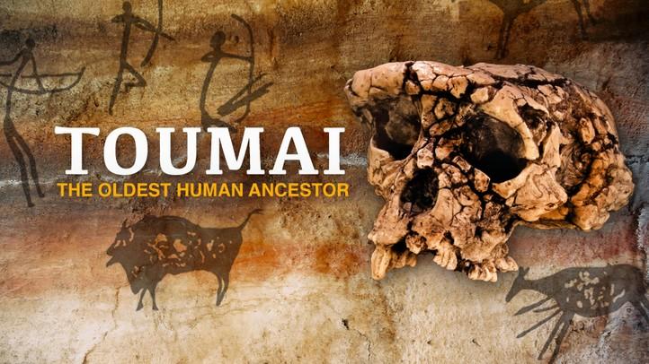 Toumai: The Oldest Living Ancestor