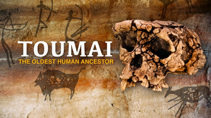 Toumai: The Oldest Living Ancestor