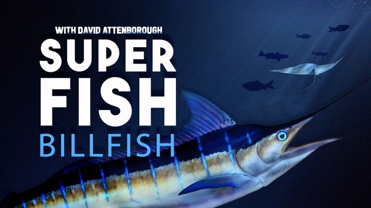 Billfish: Superfish with David Attenborough