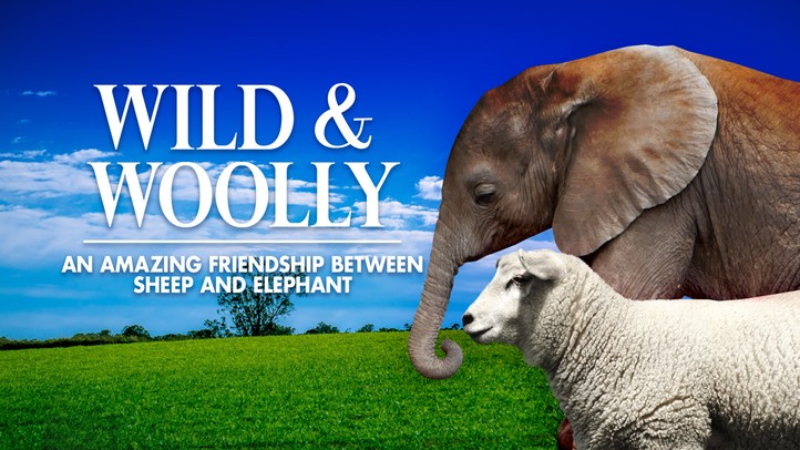 Wild and Woolly: An Amazing Friendship Between Sheep and Elephant