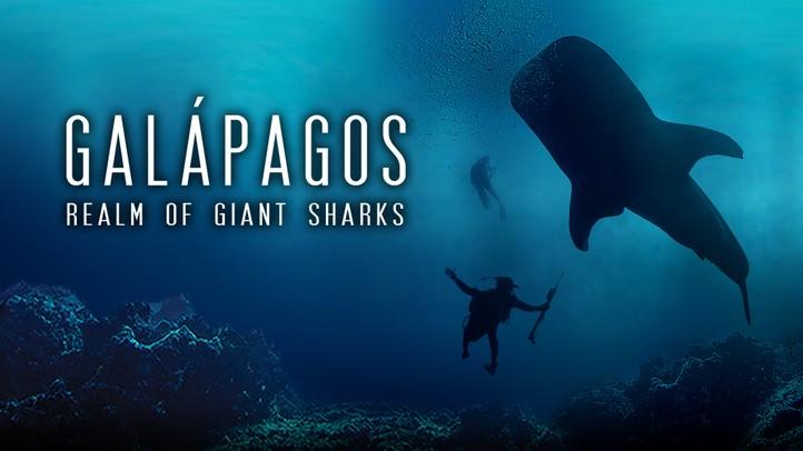 Galapagos Realm of Giant Sharks 4k