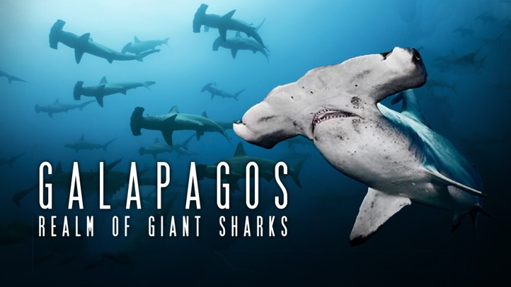 Galapagos Realm of Giant Sharks 4k