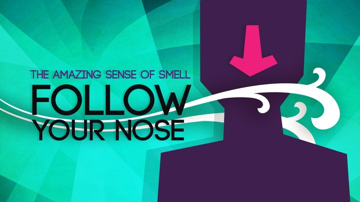 Follow Your Nose