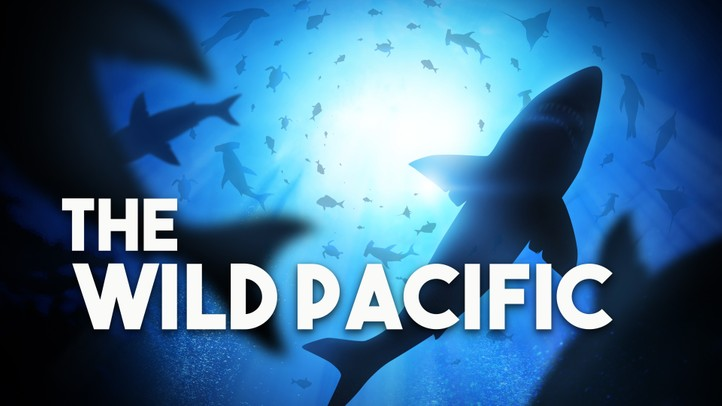 The Wild Pacific 4k