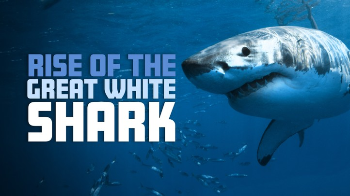 Rise of the Great White Shark 4k