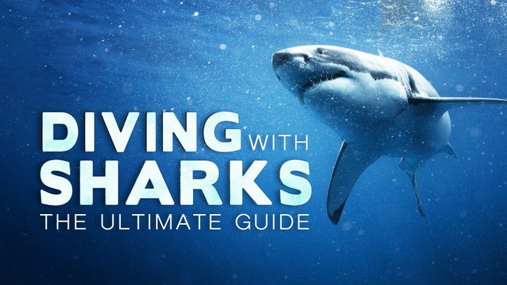 Diving With Sharks: The Ultimate Guide 4K