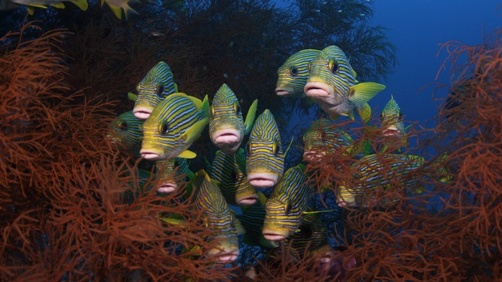 Bejeweled Fishes 4k