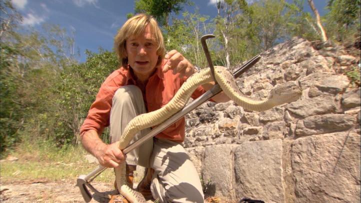 The Last Serpent