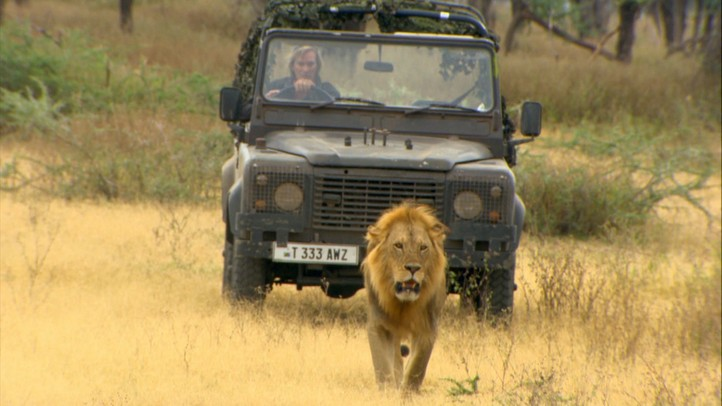 Killer Lion Stakeout