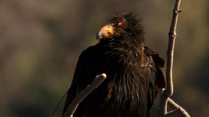 The Condor's Egg