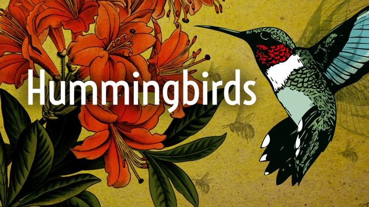 Hummingbirds with David Attenborough