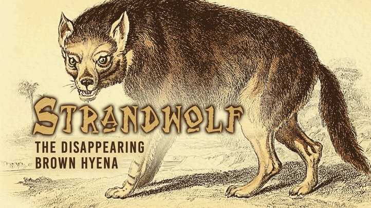 Strandwolf: Disappearing Brown Hyena