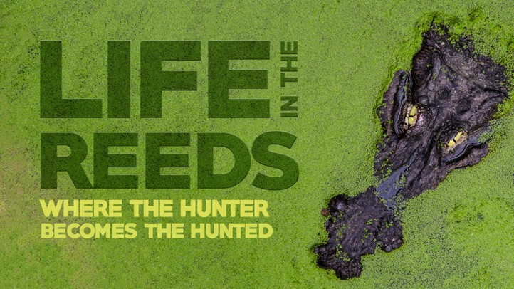 Life in the Reeds: Where the Hunter Becomes the Hunted