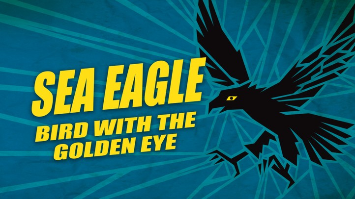 Sea Eagle: Bird with the Golden Eye