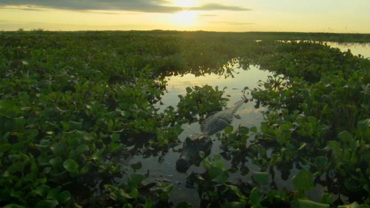 Pantanal: Brazil's Wild Heart