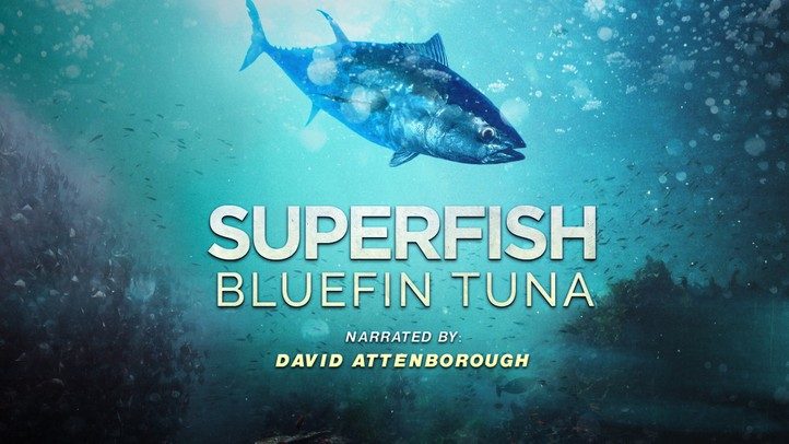 Bluefin Tuna: Superfish with David Attenborough