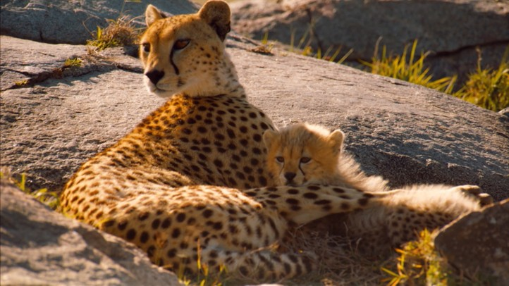 Life on the Serengeti