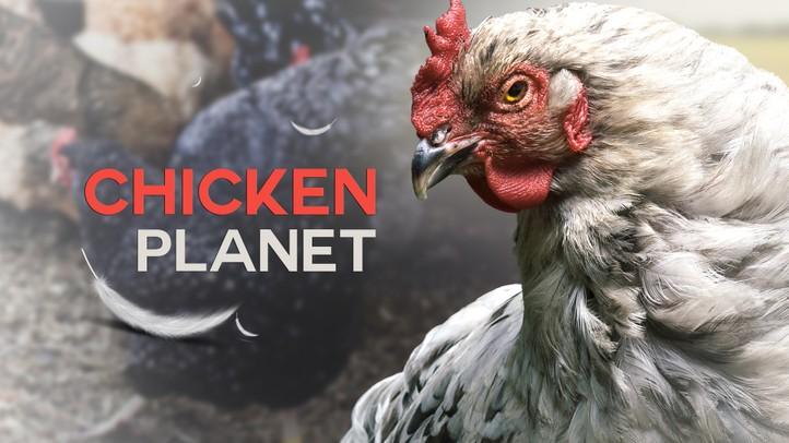 Chicken Planet 4K