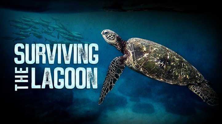 Surviving the Lagoon 4K