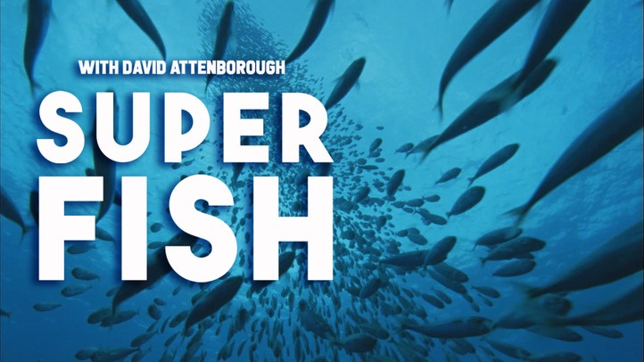 Billfish: Superfish with David Attenborough - Trailer