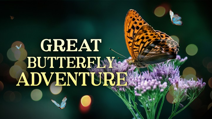 The Great Butterfly Adventure