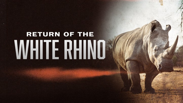 Return of the White Rhino