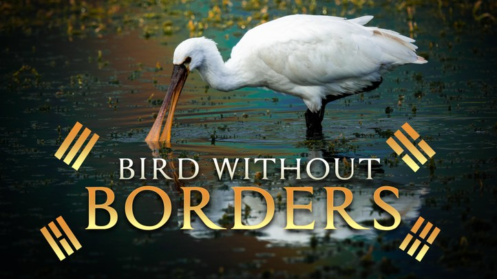 Bird Without Borders