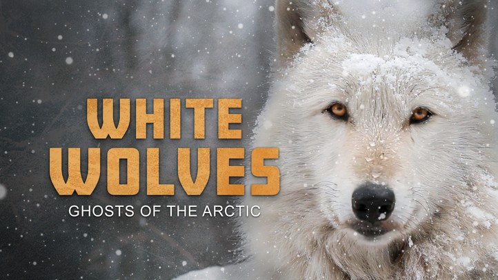 White Wolves: Ghosts of the Arctic 4K