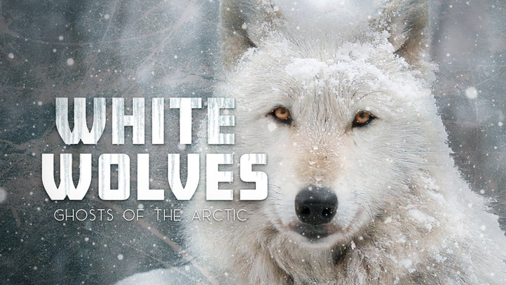 White Wolves: Ghosts of the Arctic - 4k