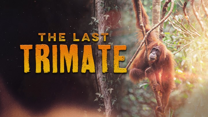 The Last Trimate