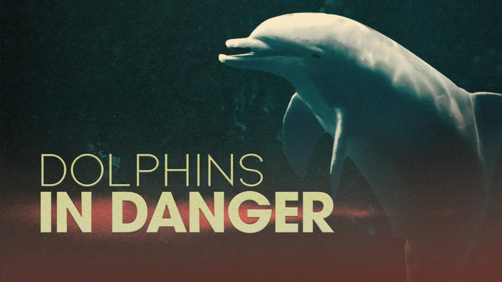 Dolphins in Danger