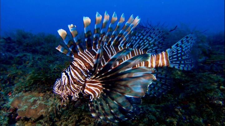 Underwater Invasion